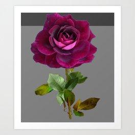 Decorative Purple Velvet  Rose Charcoal Grey Designs Art Print
