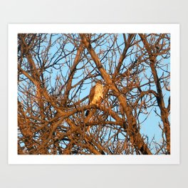 lurking cooper's hawk Art Print