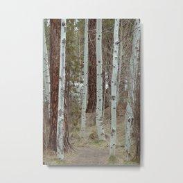 Trail Through Quaking Aspen Metal Print