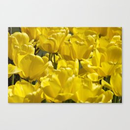 Darwin Hybrid Tulips Canvas Print