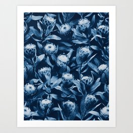 Evening Proteas - Denim Blue Art Print