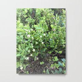 Green forest berries Metal Print