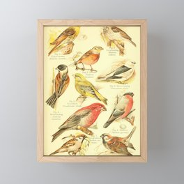 William Playne Pycraft - A Book of Birds (1908) - Plate 27: Finches, Sparrows and Buntings Framed Mini Art Print