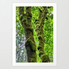Moss-Covered-Maple Art Print