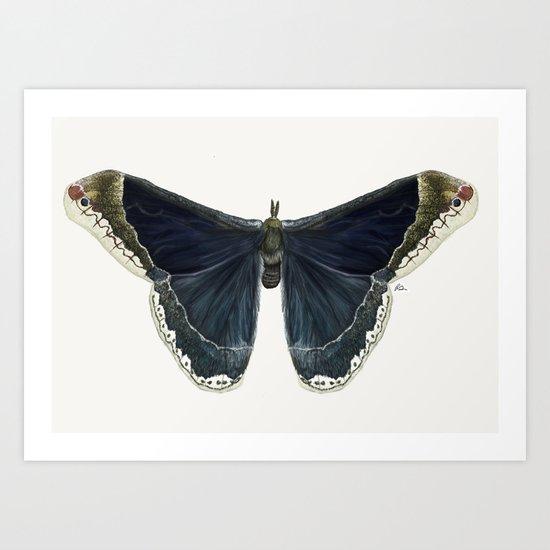 Callosamia Promethea Art Print