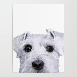 Schnauzer White Dog original painting print Poster