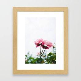 pink roses #society6 #decor #buyart Framed Art Print