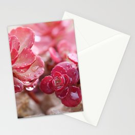 Succulent Garden Cactus Red Flowers Tropical Cacti with drops Stationery Cards