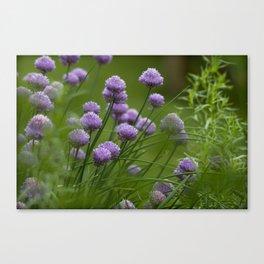 Herb Garden Chives Tarragon Parsley Canvas Print