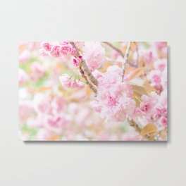 double cherry blossoms in japanese garden Metal Print