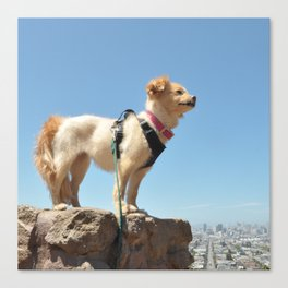 Wonder Dog in San Francisco Canvas Print