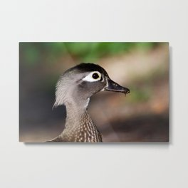 Duck during spring Metal Print