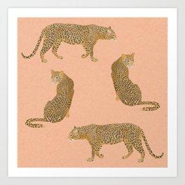 sunset leopards Art Print