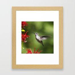Hummingbird Beauty Framed Art Print