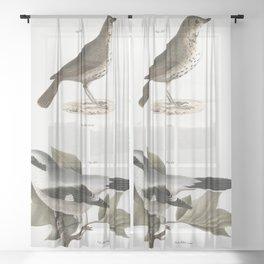 128 The Hooded Warbler (Wilsonia mitrata) 129 The Blackpoll Warbler (Sylvicola striata) 130 The Summ Sheer Curtain