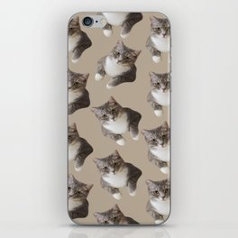 beige tan grey american wirehair cat pattern iPhone Skin