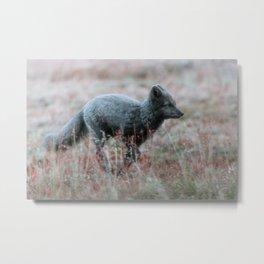 Arctic Fox running through a dream Metal Print