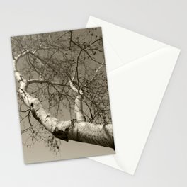 Birch tree #01 Stationery Cards