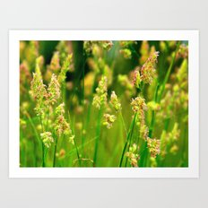 Summer in the Meadows. Art Print
