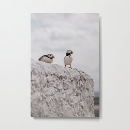 Travel Photography, England, Puffins on wall, Farne Islands Metal Print