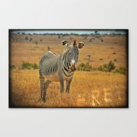zebra Canvas Prints featuring Zebra by minx267