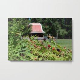 Sherwood Berries Metal Print