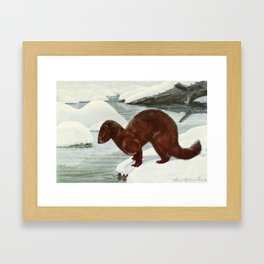 Fuertes, Louis Agassiz (1874-1927) - Burgess Animal Book for Children 1920 (Mink) Framed Art Print
