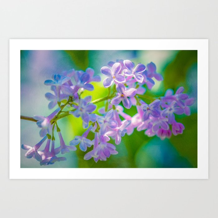 Purple Lilac Flowers Art Print
