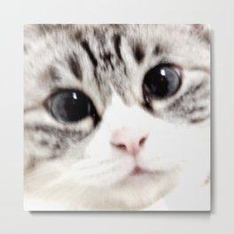 My name is chill of pink nose and blue eyes. I Love Cat. (Normal) Metal Print