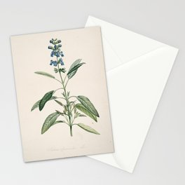 salvia officinalis Redoute Roses 3 Stationery Cards