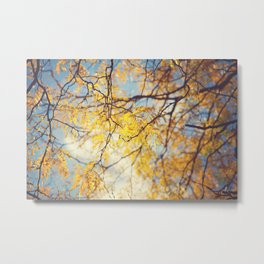 Gold Leaves and Blue Sky Metal Print
