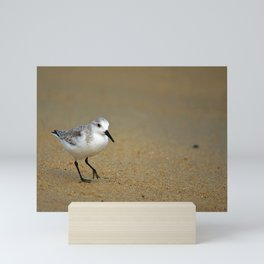 Sanderling Mini Art Print