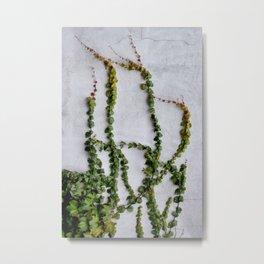 Upward Climbing (green vine on grey wall) Metal Print