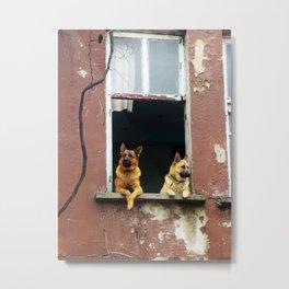 dog's voyeur Metal Print