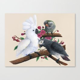 Fluffer, Congo and Charlie Canvas Print