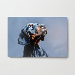 Doberman puppy Metal Print