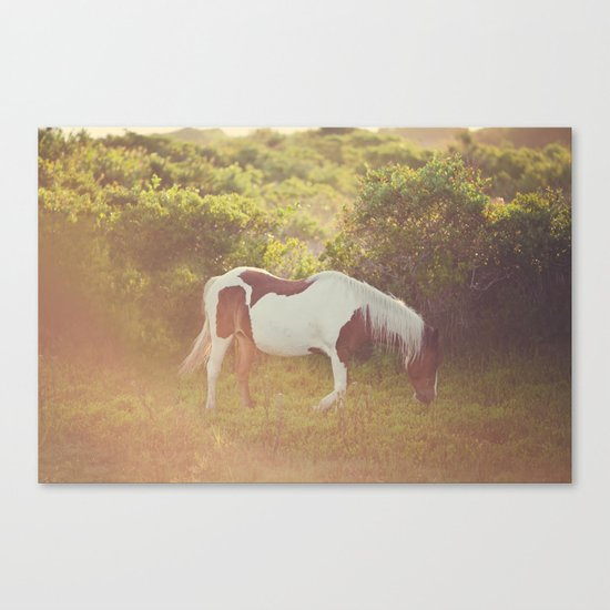 Beauty In The Wild  Canvas Print