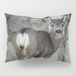 Young Mule Deer Pillow Sham