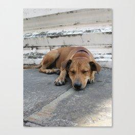 Lazy Dog Canvas Print