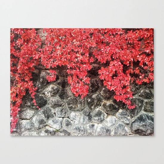 Red ivy leaves autumn stone wall Canvas Print