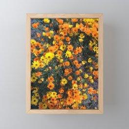 California Super Bloom Framed Mini Art Print