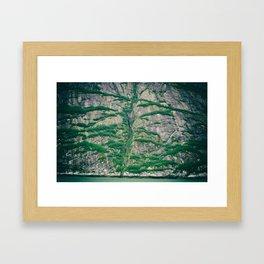Rocktree Framed Art Print