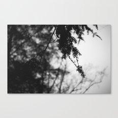 Quiet Rain Canvas Print