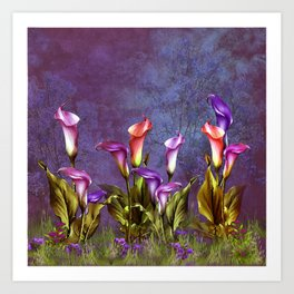 Morning Light in a Calla Lily Garden Art Print