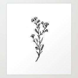 Buttercup Sprig Art Print