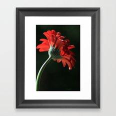 The Red Sun Dancer Framed Art Print