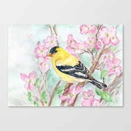 Goldfinch and Dogwood Flowers Canvas Print