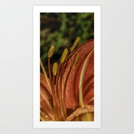 Colorful Tiger Lily Art Print