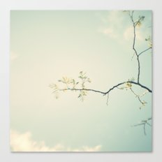 Days go by Canvas Print