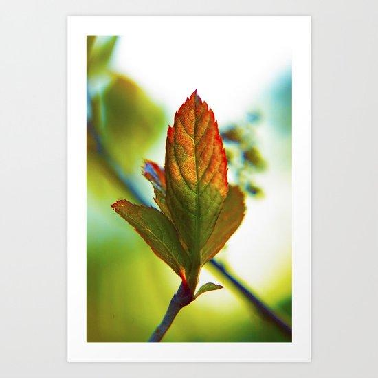 Glowing leaf Art Print
